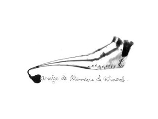 Amigos do patrimonio de Castroverde